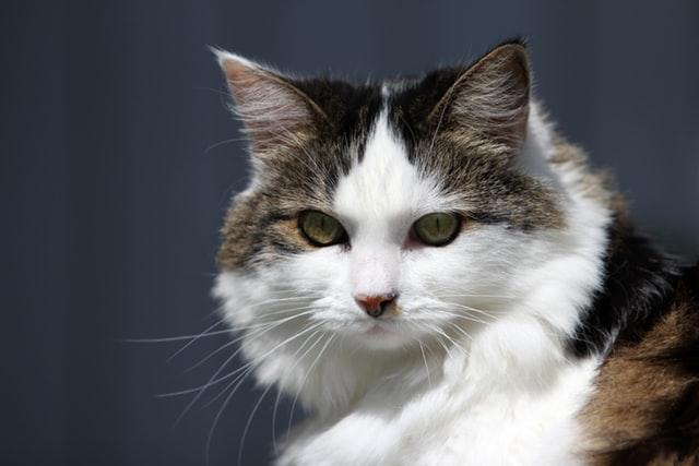อาหารแมว เกรดพรีเมี่ยม ยี่ห้อไหนดี